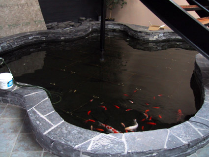 Atlas Steel Int. Fish Pond